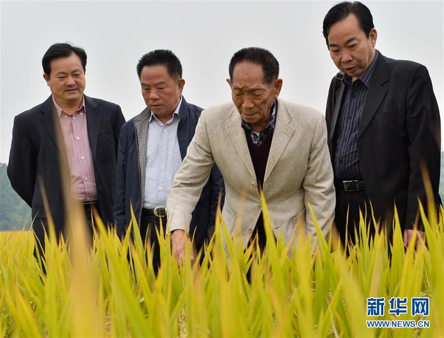 (壮丽70年·奋斗新时代——共和国荣光·图文互动)(2)袁隆平:把对祖国的热忱结成饱满的稻穗